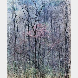 Sold for: $5,228 - Eliot Porter (American, 1901-1990)      Redbud Tree in Bottom Land, Red River Gorge, Kentucky, April 17, 1968.