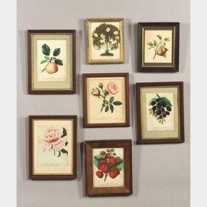 Seven Framed Polychrome Fruit and Floral Prints