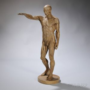 Plaster Anatomical Statue of a Man