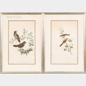 Four J. Gould & H.C. Richter Hand-colored Ornithological Lithographs: Accentor Nipalensis, Calothorax Calliope, Staphida Torqueola, and