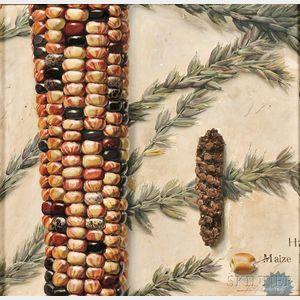 Stanley Meltzoff (American, 1917-2006)    Maize