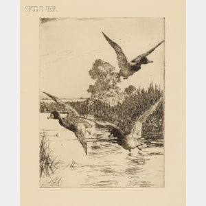 Frank Weston Benson (American, 1862-1951)      Startled Ducks