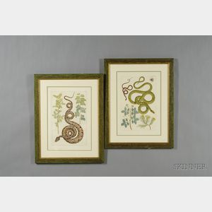Six Decorative Dutch Hand-colored Engravings of Snakes