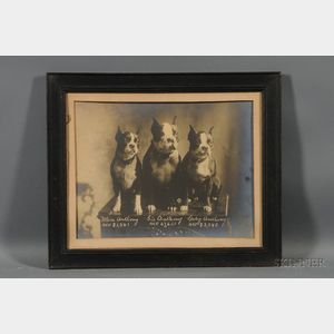 Framed Albumen Portrait Photograph of Three AKC Boston Terriers