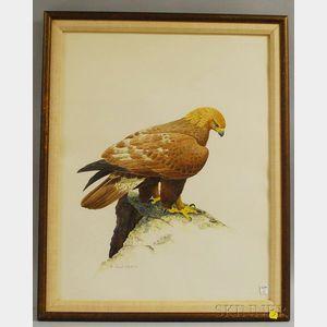 David Plank (American, b. 1934)      Golden Eagle at Watch