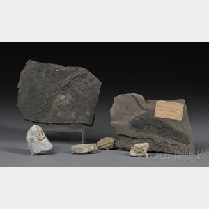 Group of Six Fossils