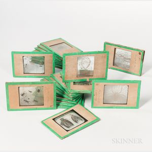 Magic Lantern Slides Depicting Spiders