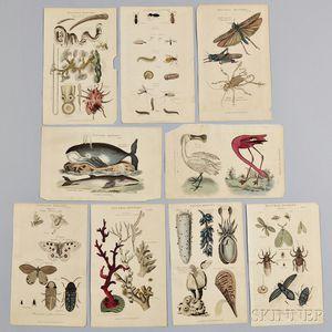 Nine Natural History Book Plates