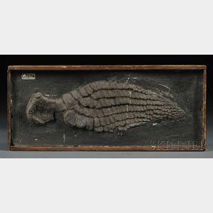 Ichthyosaurus Paddle