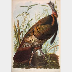 Sold for: $281,000 - Audubon, John James (1785-1851), Rare and Fine Copy