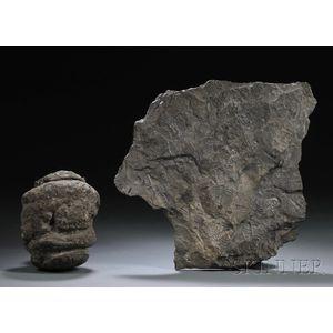 Trilobite and Sequoia Pinecone