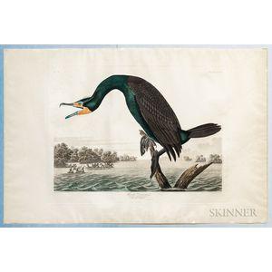 Audubon, John James (1785-1851) Florida Cormorant  , Plate CCLII.