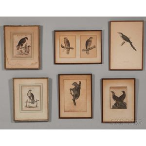 European and American Schools, 18th/19th Century, Seven Framed Prints: Five Birds of Prey including two by George Edwards (British, 169