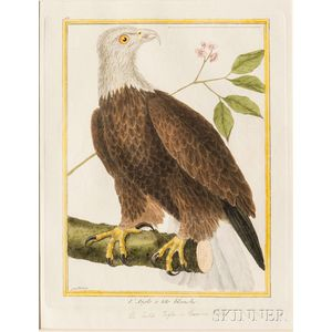Martinet, Francois Nicolas (1725-1804) Ornithological Illustrations, Three Framed, Hand-colored Engravings of Eagles.