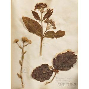Medicinal Herbarium Scrapbook