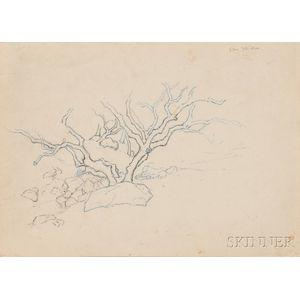 Stephen Maxfield Parrish (American, 1846-1938)      Two Works: Tree, San Ysidro, California