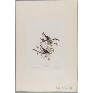 Audubon, John James (1785-1851) Song Sparrow  , Plate 25.
