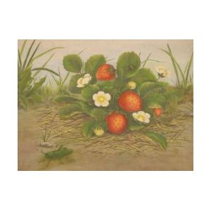 Framed Oil of Strawberries with a Grasshopper | Sale Number