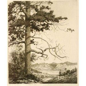 Lot of Two Vistas:  George Elbert Burr (American, 1859-1939),   Old Pine, Estes Park, Colorado