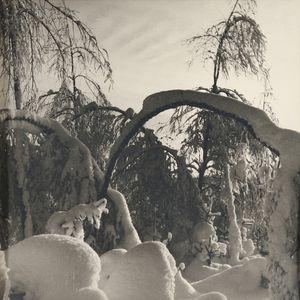 Josef Sudek (Czech, 1896-1976)      Trees with Snow.
