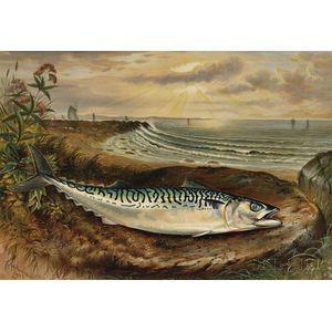 Nine Chromolithographs after Samuel A. Kilbourne (American, 1836-1881) from Game Fishes of the United States