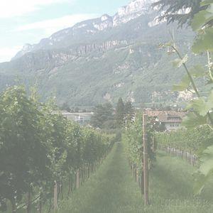 Del Bondio Cabernet Sauvignon 2001, 12 bottles