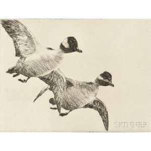 Frank Weston Benson (American, 1862-1951)      Flying Buffleheads