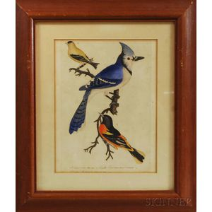 Alexander Wilson (Scottish/American 1766-1813)    Hand-colored Engraving of Birds from American Ornithology