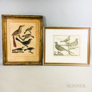 Two Framed Bird Engravings