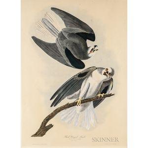 Audubon, John James (1785-1851) Black Winged Hawk.
