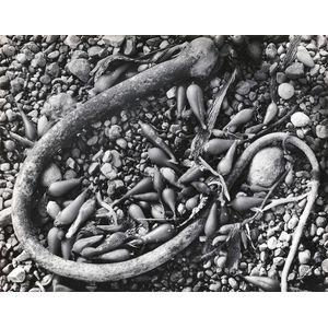 Ansel Adams (American, 1902-1984)      Seaweed and Pebbles