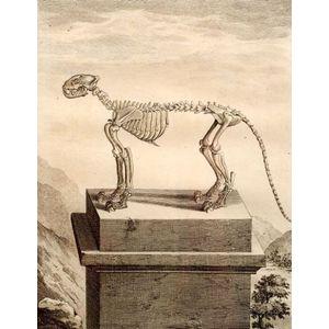 Six Framed Engravings of Animal Skeletons