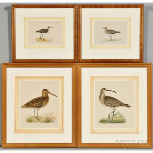 Set of Eight Framed Prints of Shorebirds