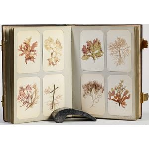 Seaweed and Botanical Samples Album, c. 1864.