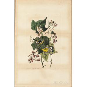 Audubon, John James (1785-1851) Black & Yellow Warbler  , Plate CXXIII.