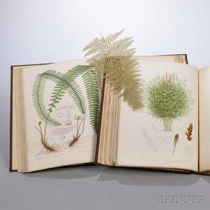 Eaton, Daniel Cady (1834-1895) The Ferns of North America.