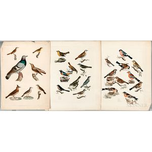 Three Hand-colored Engravings of Birds