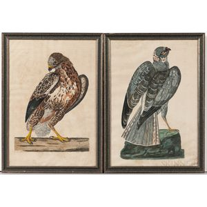Mazell, Peter (active c. 1761-1797) Two Ornithological Illustrations.
