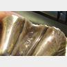 Harlequin Pair of George II/III Silver Shell-Form Salt Cellars